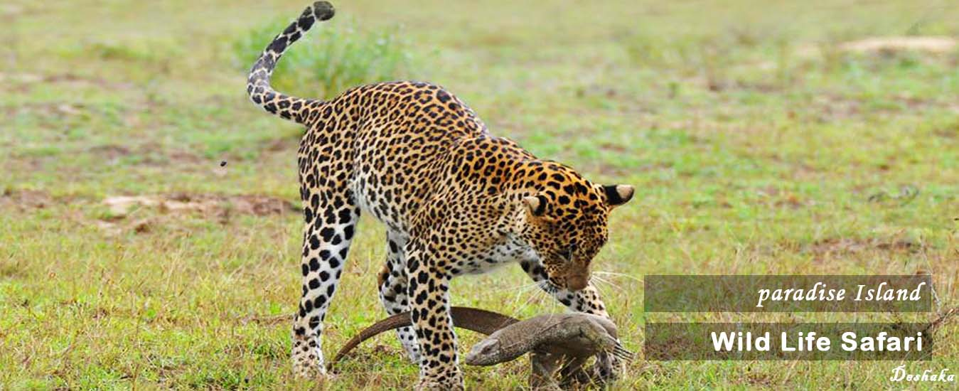 Yala  National Park|Yala Safari|Yala Highlights |Camping at Yala National park|Wildlife in Sri Lanka |National Park in Sri Lanka|Sri Lanka Mini tours Sri Lanka